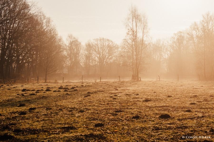 Nebel und Sonne (10 von 11)