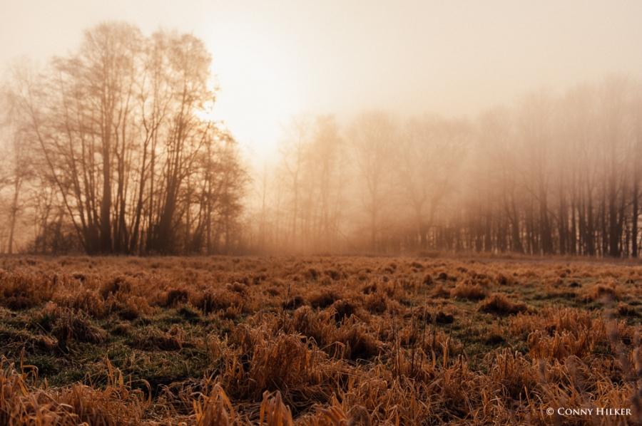 Nebel und Sonne (4 von 11)
