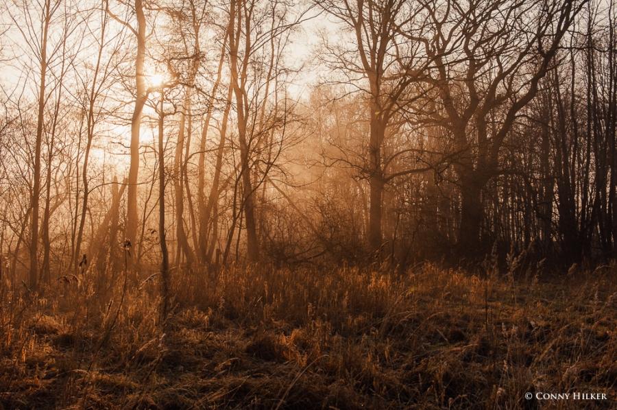 Nebel und Sonne (7 von 11)