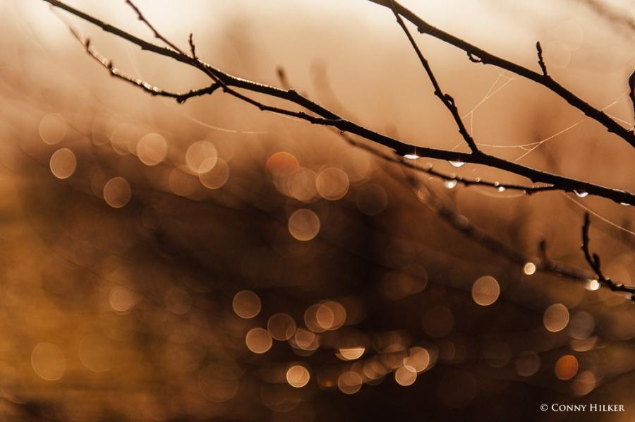 Nebel und Sonne (8 von 11)