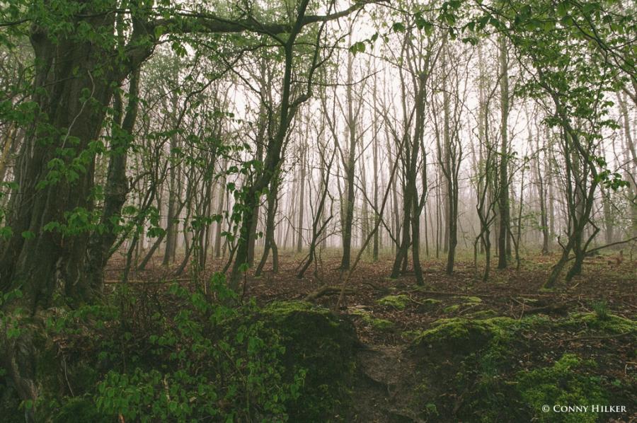 Im Wald (1 von 5)