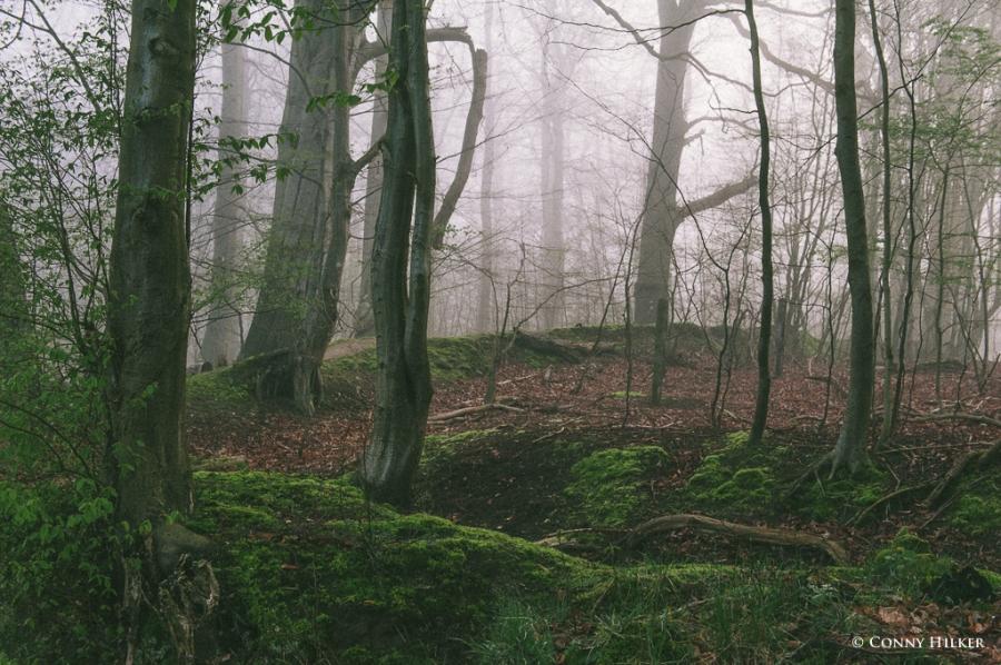 Im Wald (2 von 5)