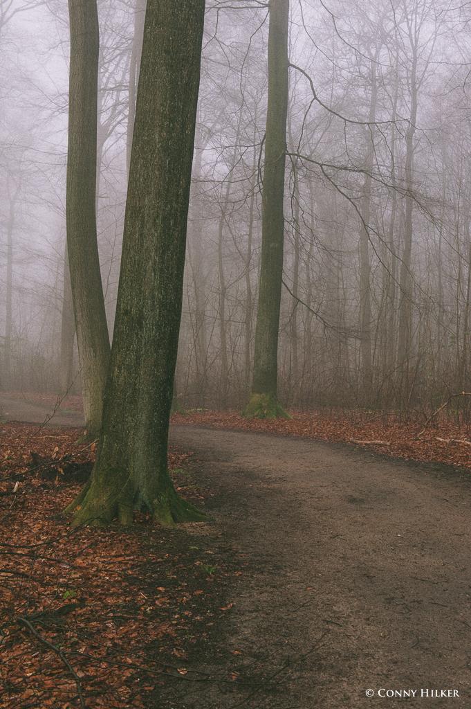 Im Wald (3 von 5)