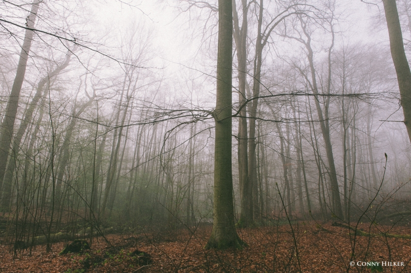 Im Wald (4 von 5)