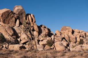 Fels und Baum auf Tuchfühlung