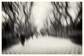 Central Park, New York in motion, in Bewegung, monochrom