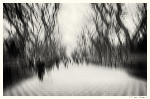 Central Park, New York in motion, in Bewegung, monochrom
