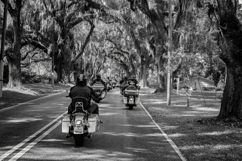 USA, Louisanamoos, Allee, Harley Davidson, Motorradtour, b/w, Südstaaten, s/w