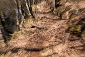 Ein Waldweg mit starkem Zoom-Effekt