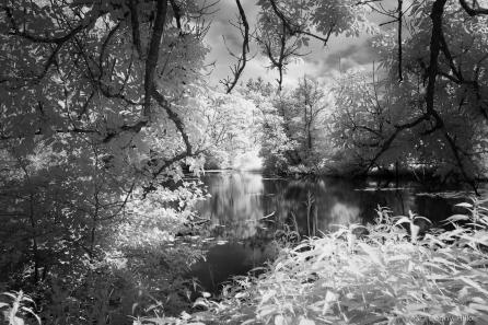 Infrarot, Fuji x100t, Natur, woodeffekt