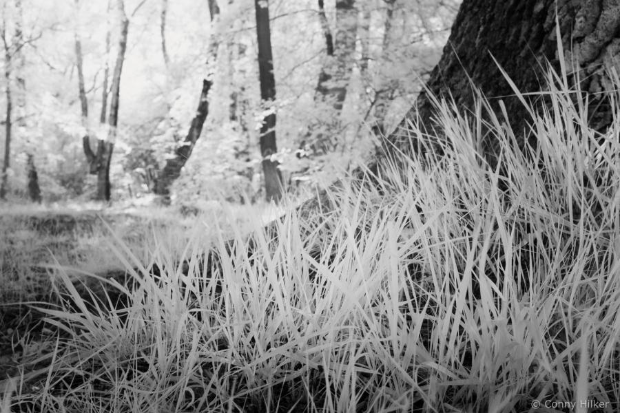 Infrarot, Gras, Baum, Natur