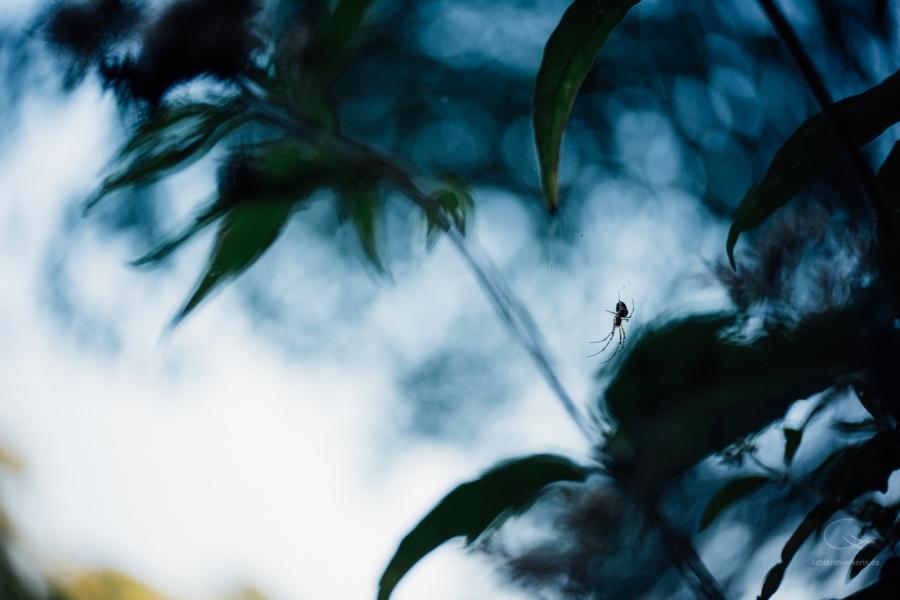 Lensbaby Twist, Spinne im Gegenlicht