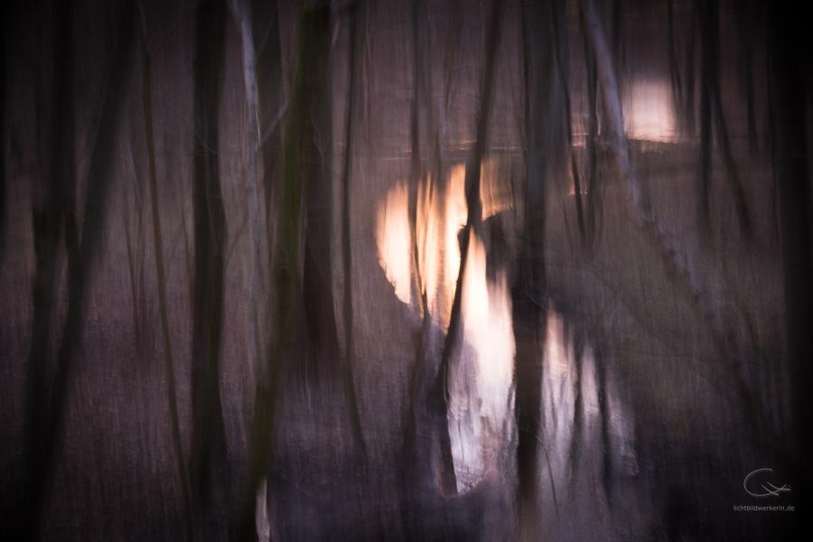 Stimmung im Wald an einem Bach.